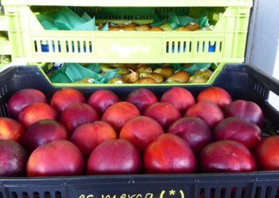 Frutas - Fruites Bon Any